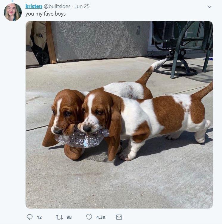dog tweet - Dog - kristen @builtsides Jun 25 you my fave boys t 98 12 4.3K