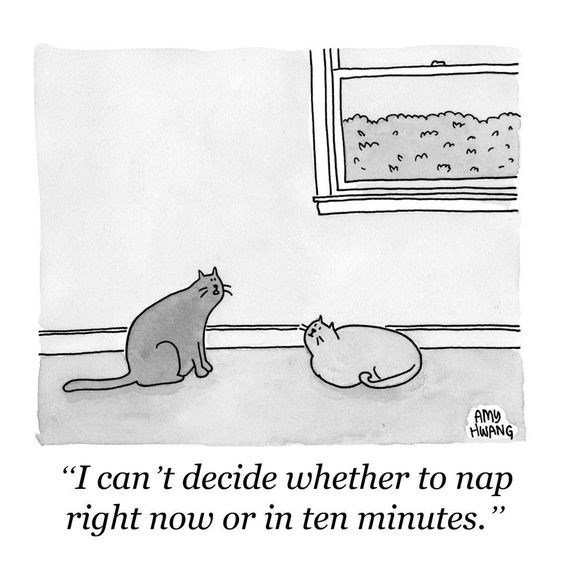 """cat napping - Cartoon - AMY HWANG """"I can't decide whether to nap now or in te minutes right"""