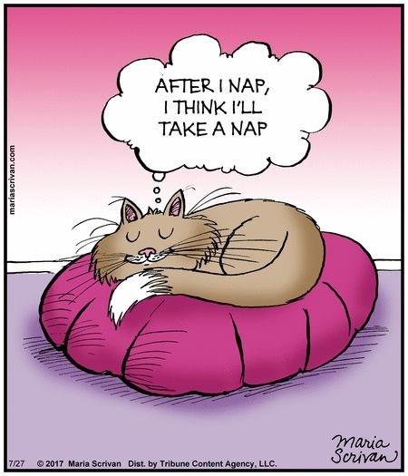 cat napping - Cartoon - AFTER I NAP, I THINK I'LL TAKE A NAP maria Scrivan 2017 Maria Scrivan Dist. by Tribune Content Agency, LLC. 7/27 woouBAUoseuew