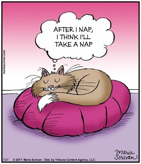 cat napping - Cartoon - AFTER I NAP, I THINK I'LL TAKE A NAP maria Scrivan 2017 Maria Scrivan Dist. by Tribune Content Agency, LLC. 7/27 woouBAUoseuew