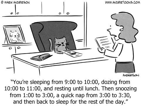 """cat napping - Cartoon - MAZK ANDEZSON Www.ANDERTOONS.COM ArpeRsoN """"You're sleeping from 9:00 to 10:00, dozing from 10:00 to 11:00, and resting until lunch. Then snoozing from 1:00 to 3:00, a quick nap from 3:00 to 3:30, and then back to sleep for the rest of the day."""" C"""