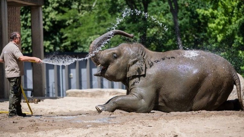 Elephant playing with cold water