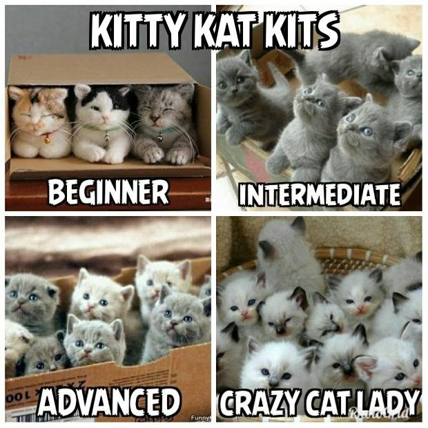 crazy cat lady various size kitty kat kits