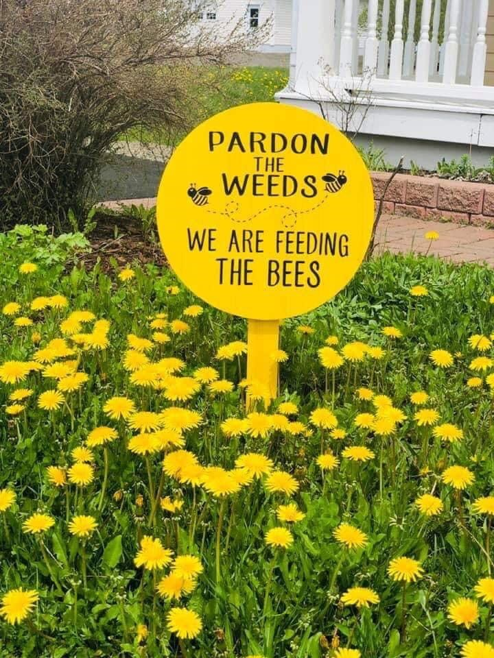 sign up in a weed patch saying the owners left out the weeds to help the bees