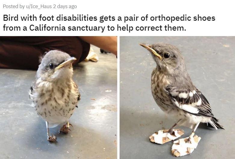 aww cute Sanctuary bird orthopedic shoes - 9324663552