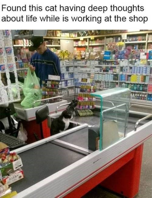 meme of a cat sitting where the cashier belongs at a store and lost in some deep thought about life and the meaning of the universe
