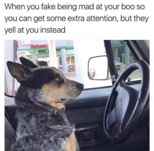 meme - Dog - When you fake being mad at your bo0 so you can get some extra attention, but they yell at you instead