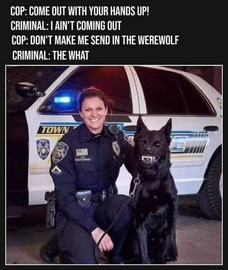meme - Police dog - COP: COME OUT WITH YOUR HANDS UP! CRIMINAL: I AIN'T COMING OUT COP: DON'T MAKE ME SEND IN THE WEREWOLF CRIMINAL: THE WHAT TOWN