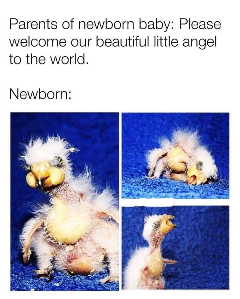 shitpost - Organism - Parents of newborn baby: Please welcome our beautiful little angel to the world. Newborn:
