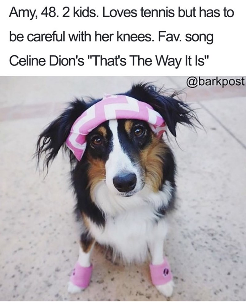 """Dog - Amy, 48. 2 kids. Loves tennis but has to be careful with her knees. Fav. song Celine Dion's """"That's The Way It Is"""" @barkpost"""
