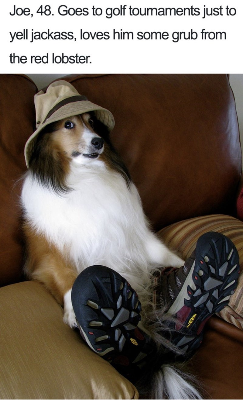 Dog bio - Shetland sheepdog - Joe, 48. Goes to golf toumaments just to yell jackass, loves him some grub from the red lobster.