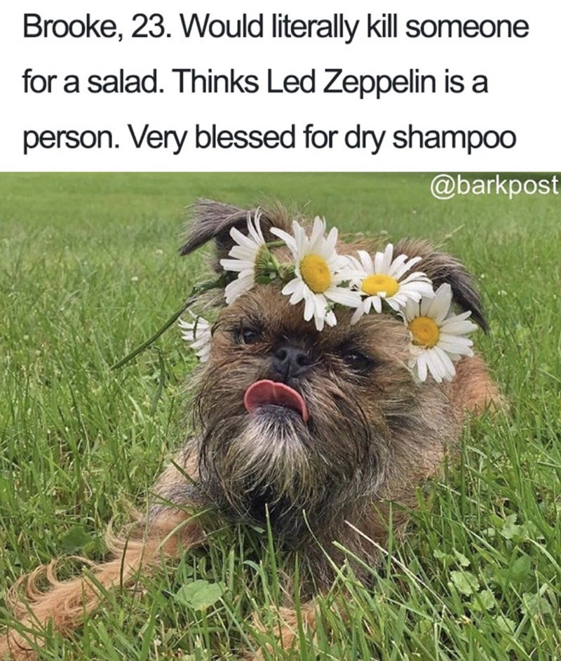 Dog - Brooke, 23. Would literally kill someone for a salad. Thinks Led Zeppelin is a person. Very blessed for dry shampo0 @barkpost