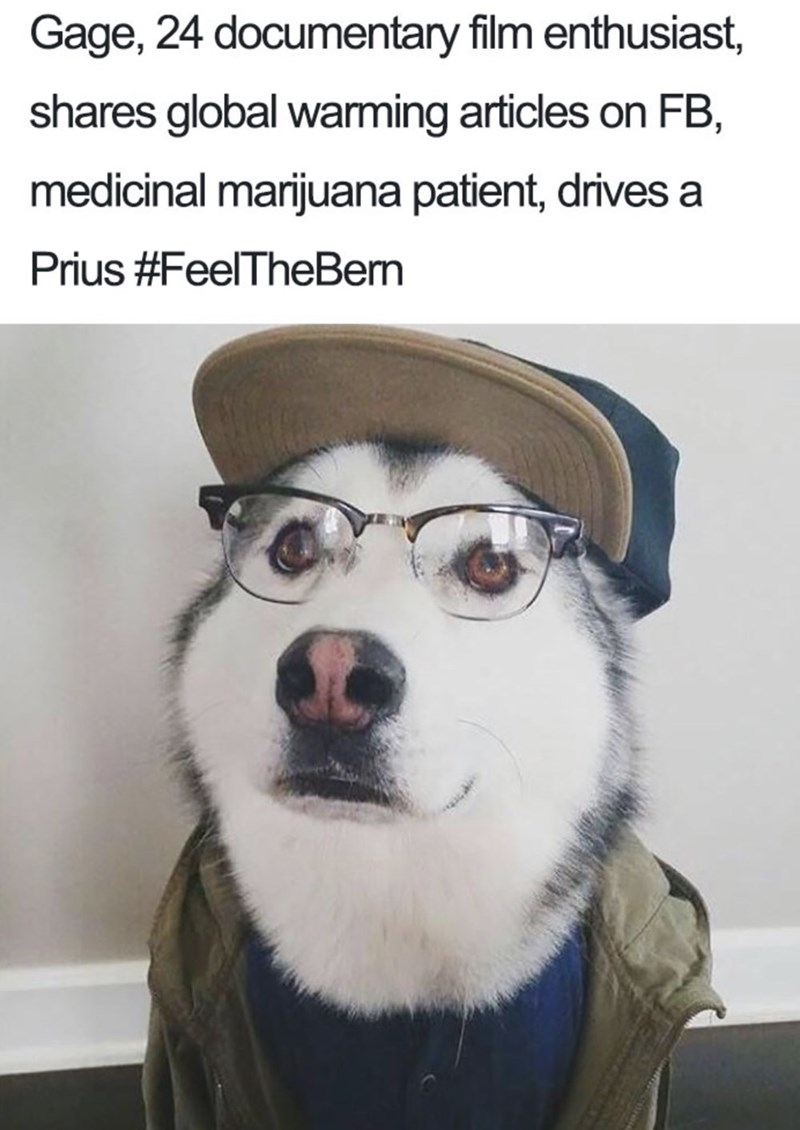 Dog bio - Siberian husky - Gage, 24 documentary film enthusiast shares global warming articles on FB, medicinal marijuana patient, drives a Prius #FeelTheBem