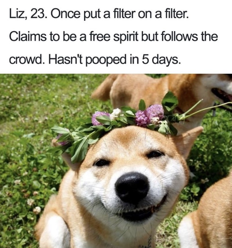 Dog bio - Dog - Liz, 23. Once put a filter on a filter. Claims to be a free spirit but follows the crowd. Hasn't pooped in 5 days.