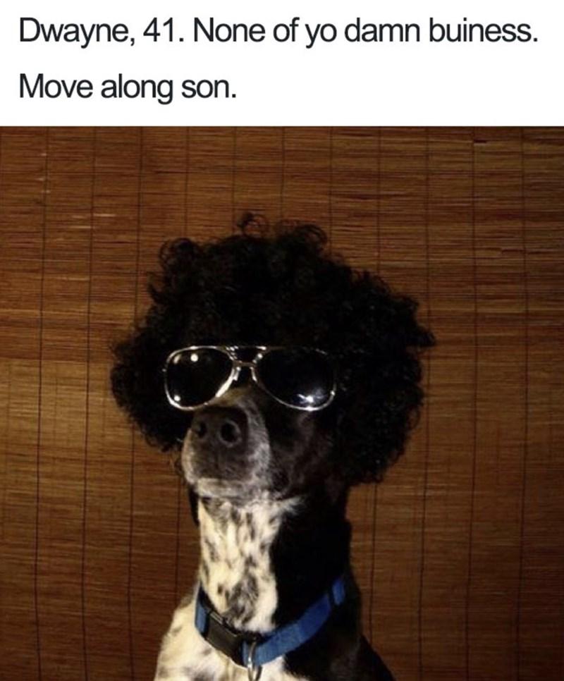 Dog bio - Dog - Dwayne, 41. None of yo damn buiness. Move along son.
