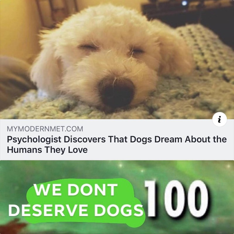 Dog - i MYMODERNMET.COM Psychologist Discovers That Dogs Dream About the Humans They Love 100 WE DONT DESERVE DOGS
