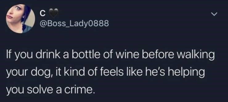 alcohol meme - Text - C @BoSS_Lady0888 If you drink a bottle of wine before walking your dog, it kind of feels like he's helping you solve a crime.