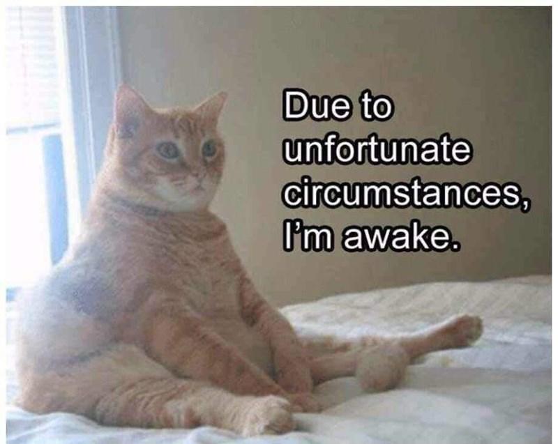 Meme - Cat - Due to unfortunate circumstances, I'm awake.