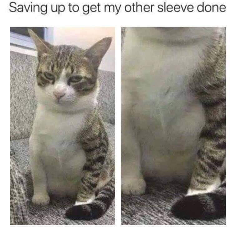 Meme - Cat - Saving up to get my other sleeve done