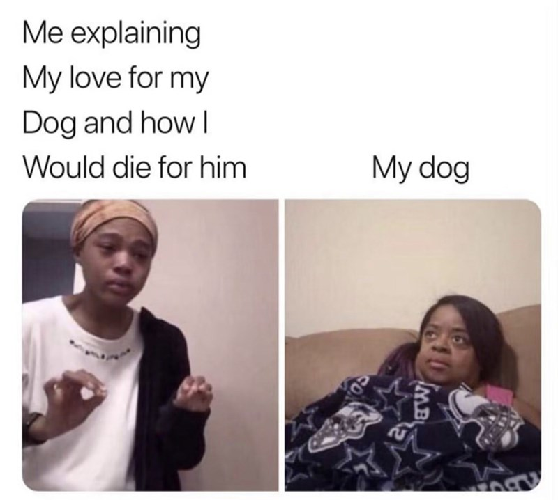 Meme - Me explaining My love for my Dog and how Would die for him My dog