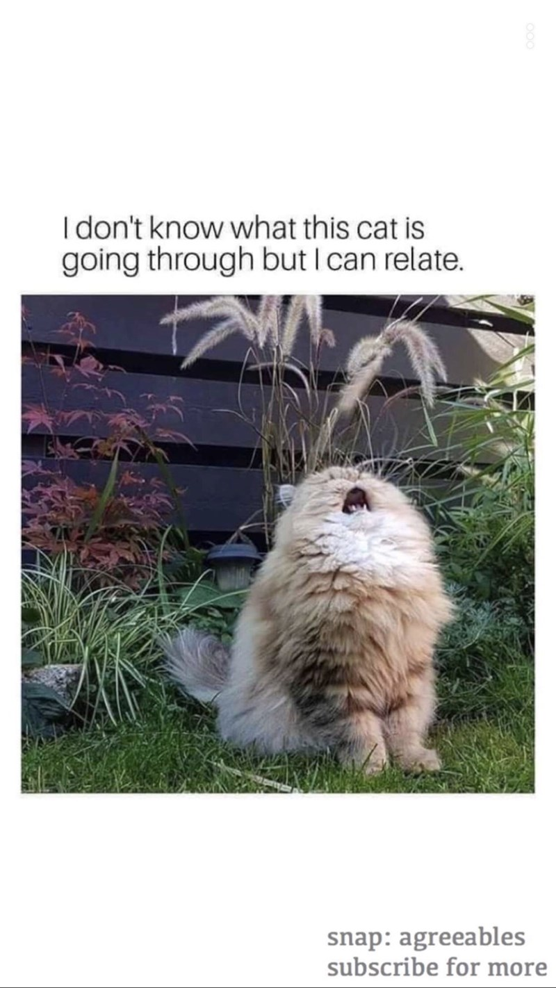 Meme - Mammal - Idon't know what this cat is going through but I can relate. snap: agreeables subscribe for more