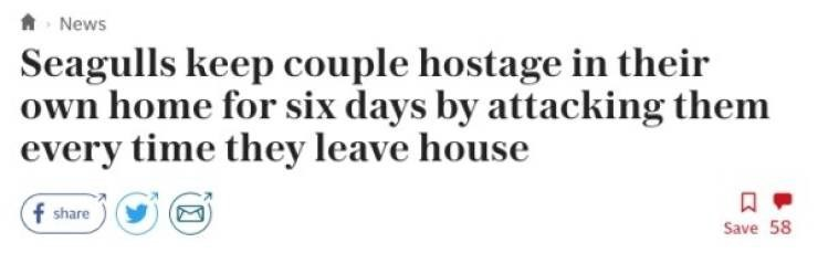 Headline - Text - ANews Seagulls keep couple hostage in their own home for six days by attacking them every time they leave house f share Save 58