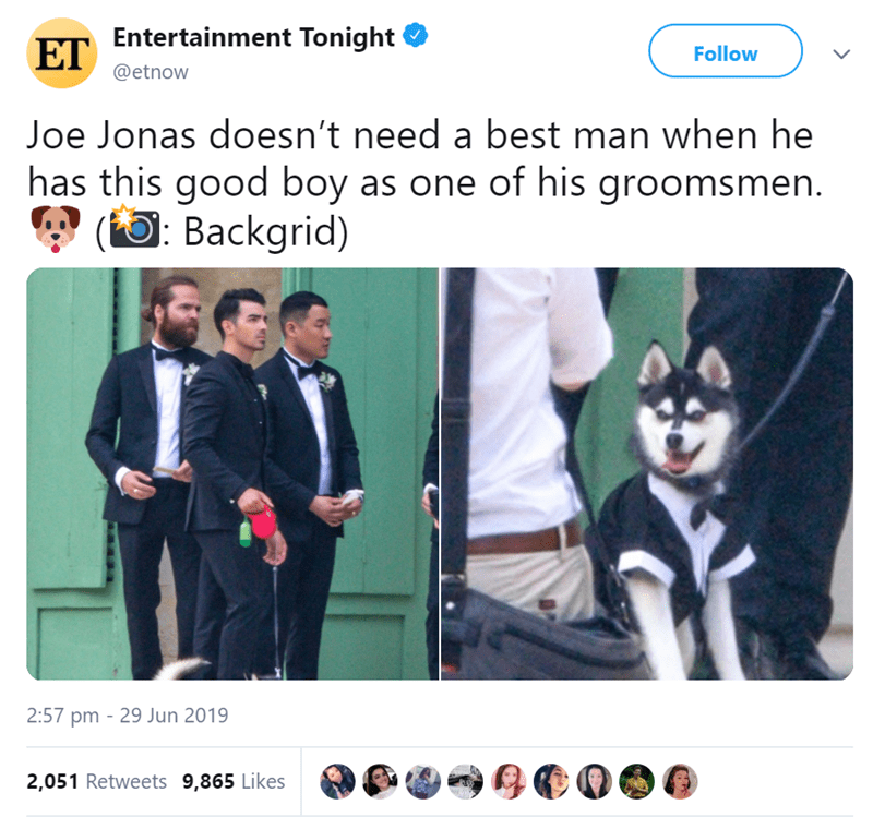 dog at a wedding - Photo caption - ET Entertainment Tonight Follow @etnow Joe Jonas doesn't need a best man when he has this good boy as one of his groomsmen. (Backgrid) 2:57 pm 29 Jun 2019 2,051 Retweets 9,865 Likes