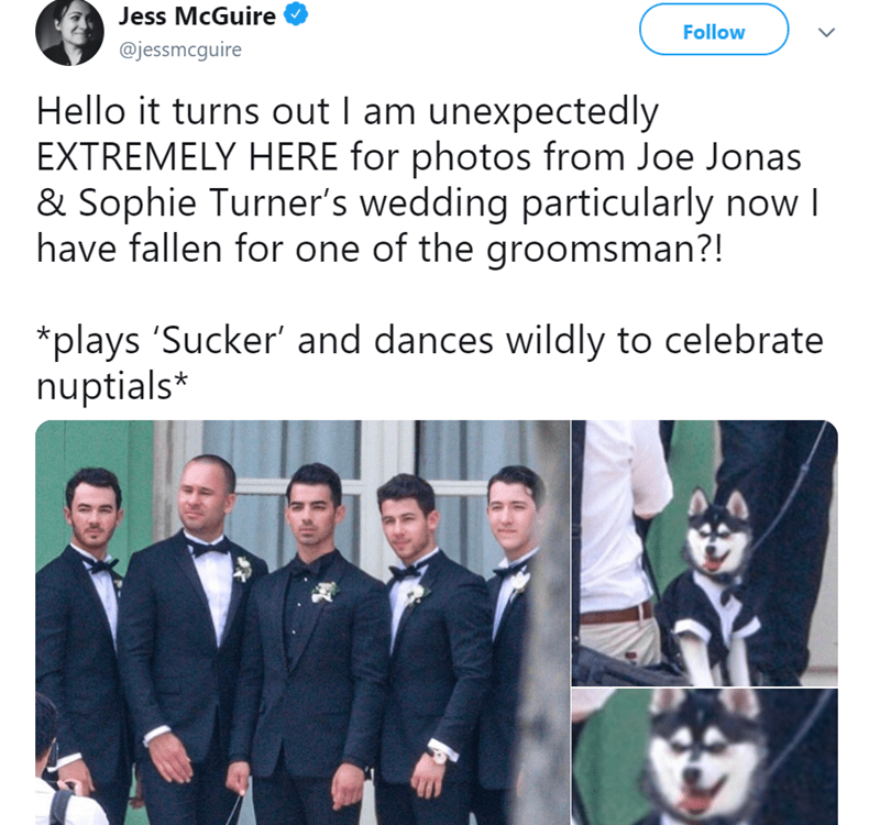 dog at a wedding - Text - Jess McGuire Follow @jessmcguire Hello it turns out I am unexpectedly EXTREMELY HERE for photos from Joe Jonas & Sophie Turner's wedding particularly now I have fallen for one of the groomsman?! *plays 'Sucker' and dances wildly to celebrate nuptials*
