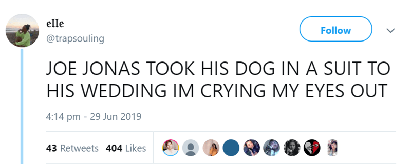 dog at a wedding - Text - elle Follow @trapsouling JOE JONAS TOOK HIS DOG IN A SUIT TO HIS WEDDING IM CRYING MY EYES OUT 4:14 pm 29 Jun 2019 43 Retweets 404 Likes