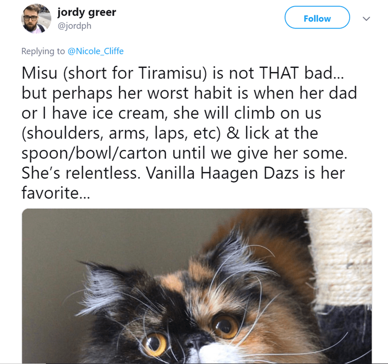 mean cat - Cat - jordy greer Follow @jordph Replying to @Nicole_Cliffe Misu (short for Tiramisu) is not THAT bad... but perhaps her worst habit is when her dad or I have ice cream, she will climb on us (shoulders, arms, laps, etc) & lick at the spoon/bowl/carton until we give her some. She's relentless. Vanilla Haagen Dazs is her favorite..