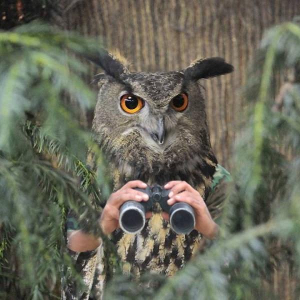 birds with arms - Owl
