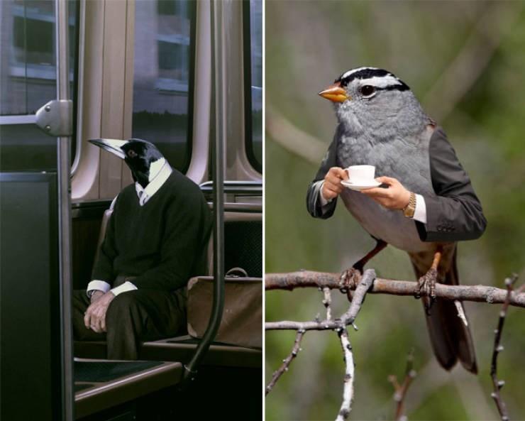birds with arms - Bird