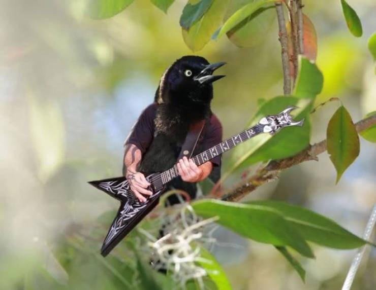 birds with arms - Bird - MR TKI BI K BR