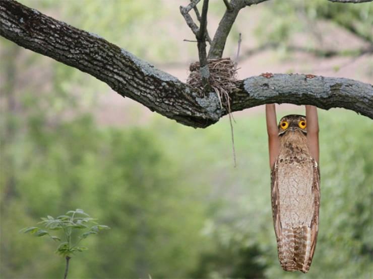 birds with arms - Tree