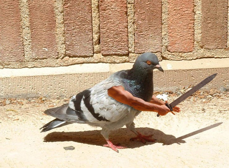 birds with arms - Rock dove