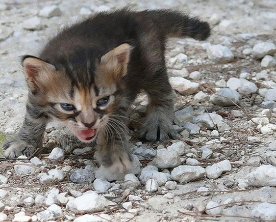 Cat showing anger and cuteness