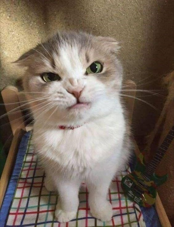 Cat - aneheri is a bit angry
