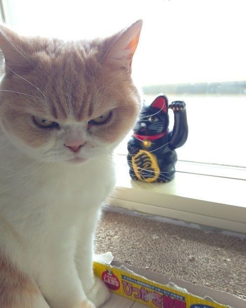 Cat - CERSO 763ぱ HOM