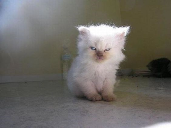 angry little cat