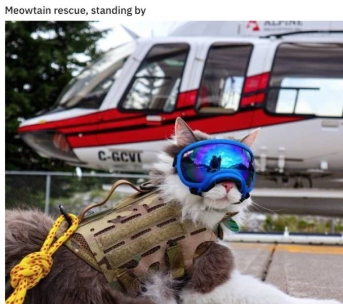 cat job - Mode of transport - Meowtain rescue, standing by ALFIRE C-G.CVI