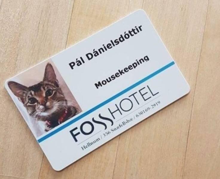 cat job - Cat - Pál Dánielsdóttir Mousekeeping FOSHOTEL Hellnum/356 Snafellsba/630169-2919
