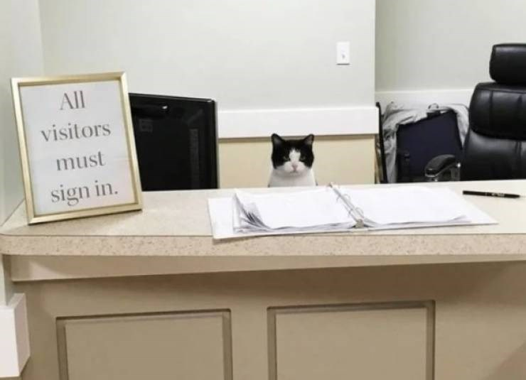 cat job - Furniture - All visitors must sign in.