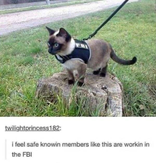 cat job - Vertebrate - twilightprincess182: i feel safe knowin members like this are workin in the FBI