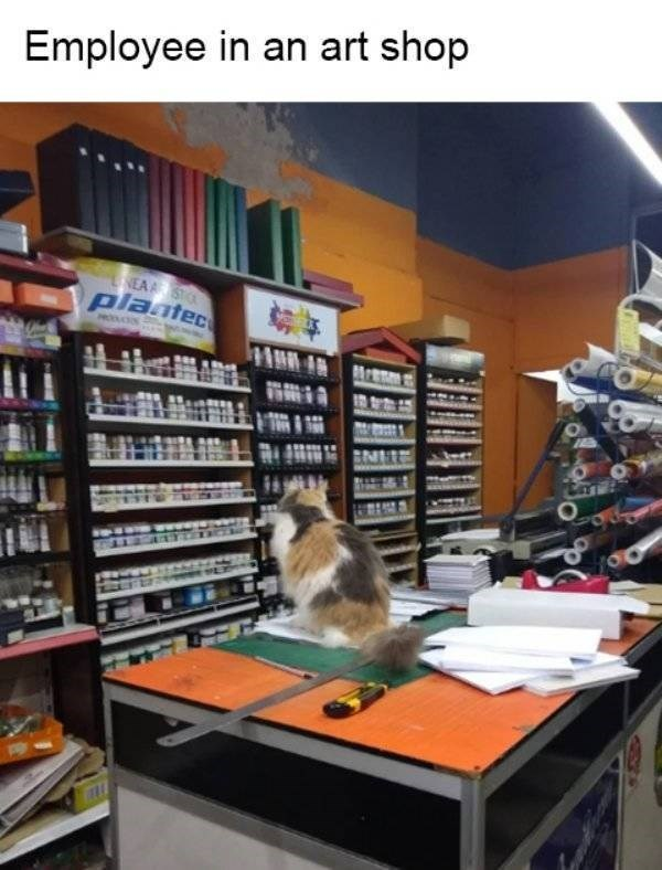 cat job - Library - Employee in an art shop NEAST plaatec