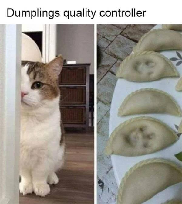 cat job - Cat - Dumplings quality controller