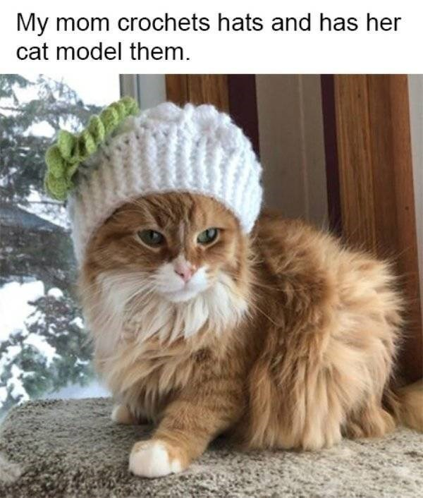 cat job - Cat - My mom crochets hats and has her cat model them.
