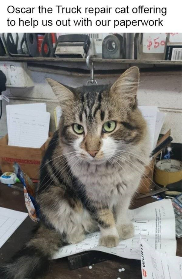 cat job - Cat - Oscar the Truck repair cat offering to help us out with our paperwork 59