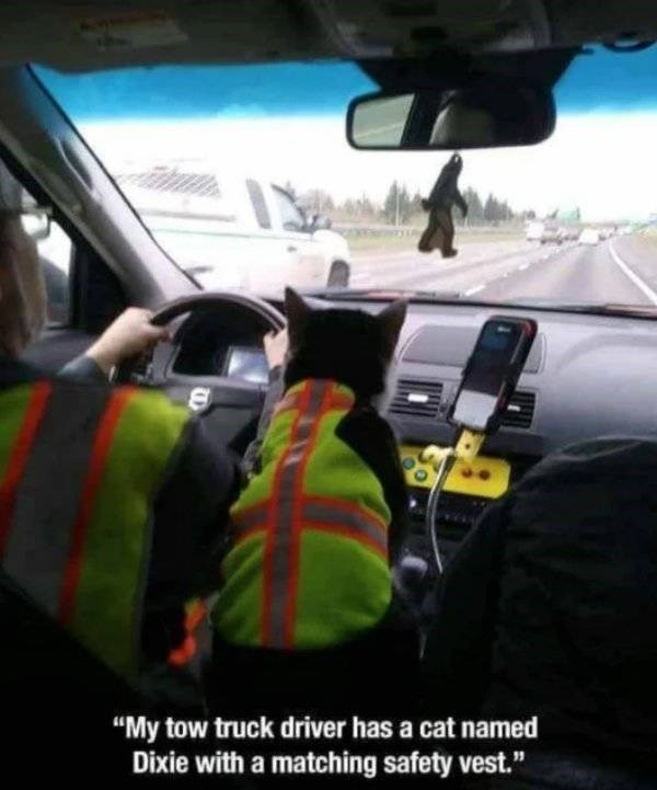 "cat job - Motor vehicle - ""My tow truck driver has a cat name Dixie with a matching safety vest."""