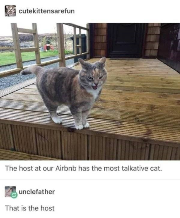 cat job - Cat - cutekittensarefun The host at our Airbnb has the most talkative cat. unclefather That is the host