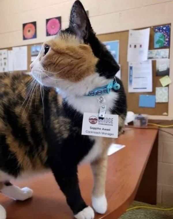 cat job - Cat - on DGE Sappho Awad Cockroach Manager